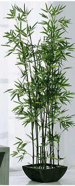 Bambus_1.jpg