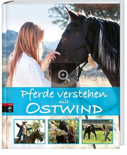 pferde_1_1.jpg
