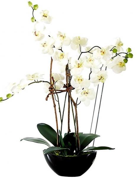 Orchideentopf.jpg
